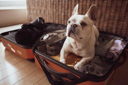 Cute Doggo in a Suitcase